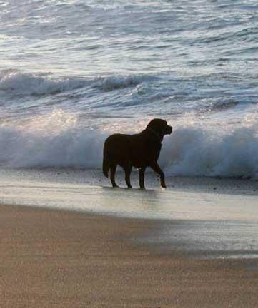 dogs in cape cod